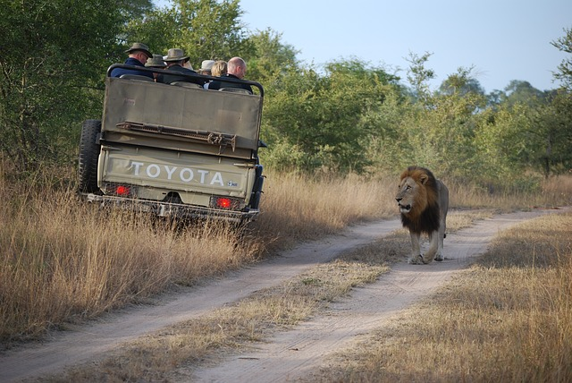 pack-for-safari