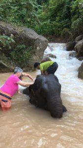 elephant myanmar