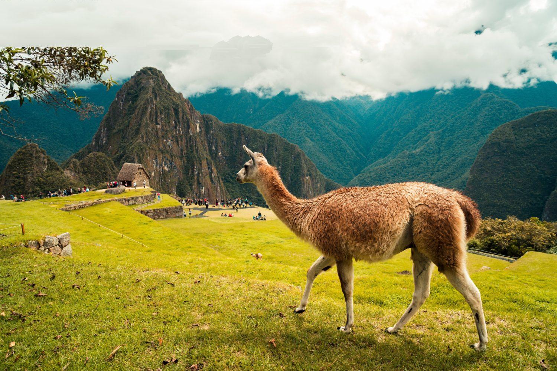 Peru Family Adventure Macchu Picchu